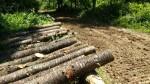 ヤマザクラ木材