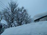 樹木の着雪