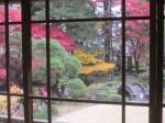 窓越し紅葉